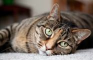 cat Carpet Cleaning
