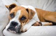 pet-odour-treatment Carpet Cleaning