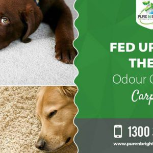 Carpet-and-Upholstery-Cleaning-300x300 Carpet and Upholstery Cleaning